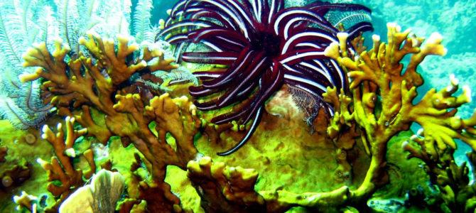 La Thaïlande ferme des sites de plongée afin de protéger ses coraux