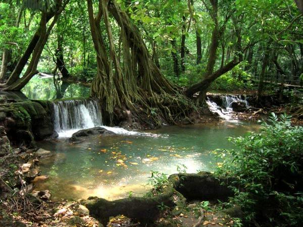 Le parc national Khao Sok – l'une des réserves fauniques les plus belles en Thaïlande
