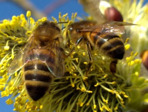 abeilles bangkok