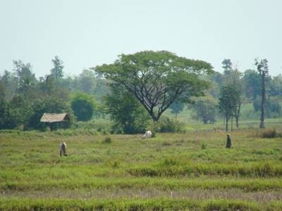 Cinq destinations à ajouter sur votre itinéraire lors d'un voyage en Thaïlande