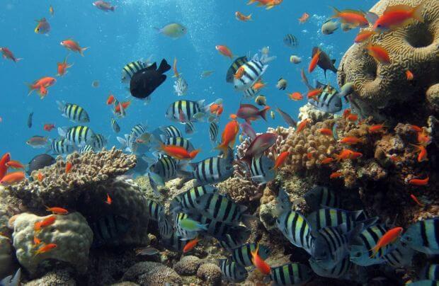 La Thaïlande entreprend de nettoyer les eaux marines du Royaume